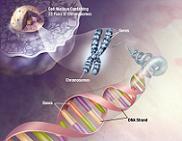 Rekayasa Genetik